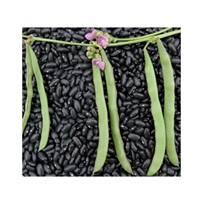 trail beans